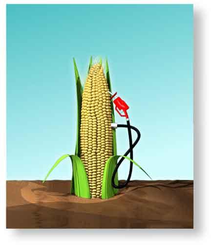В России наладят производство биосырья