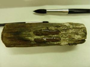 Изобретен новый полимер защищающий дерево