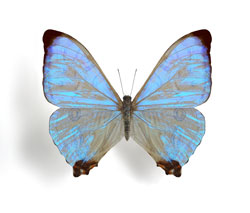 Детекторы инфракрасного излучения на крыльях бабочки!