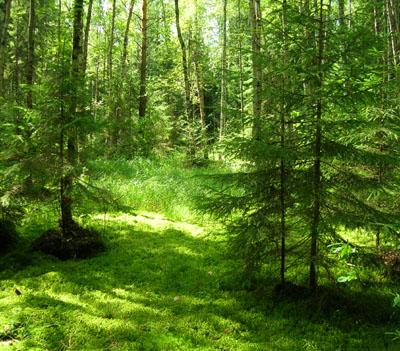 В Беларуси появилась потребность в замене полиэтиленовой тары стеклянной