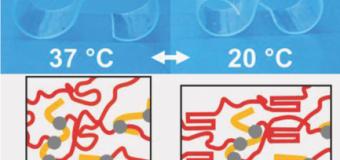 Ученые открыли новый полимер, который способен обратимо изменять свою форму