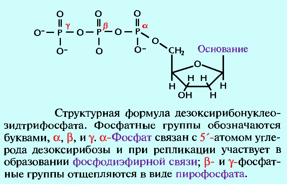 Дезоксирибонуклеозидтрифосфат структурная формула