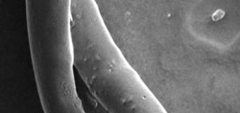 Углеродные нанотрубки будут использоваться для связи с головным мозгом