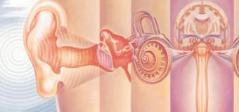 Полимерная матрица поможет в лечении внутреннего уха
