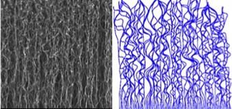 Углеродные нанотрубки: изучен механизм формирования упорядоченных структур