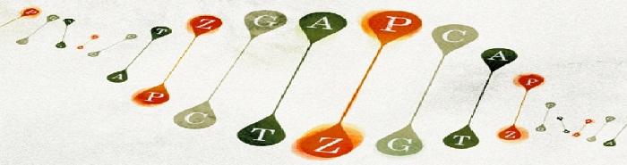 Расширенный генетический алфавит