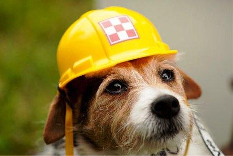 Виагра для собак от Nestle Purina PetCare