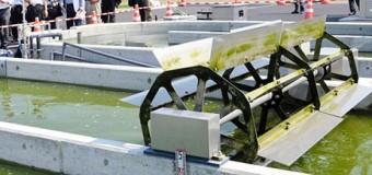 Нефть из водорослей будут добывать в Фукусиме