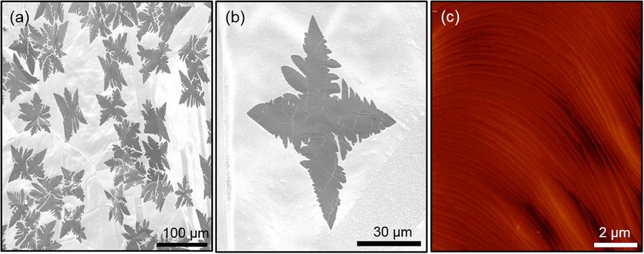 Графен подешевеет в 100 раз: формирование чешуек графена на ранних стадиях