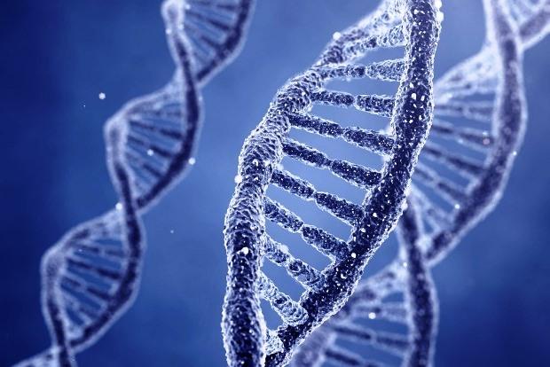ДНК 1 клетки человека вмещает 1,5 гигабайта информации