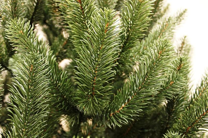 Читайте и смотрите видео о том, какими бывают и как делают искусственные новогодние елки. Рекомендации советы по выбору искусственной елки от экспертов.