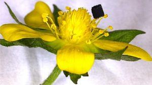 3D-печать графеном: в США разработан новый и прорывной метод (описание технологии)