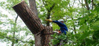 Важность удаления деревьев на участке (мнение профессионала)