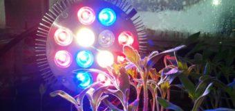 Светодиодные фитолампы для растений (ликбез поставщика)