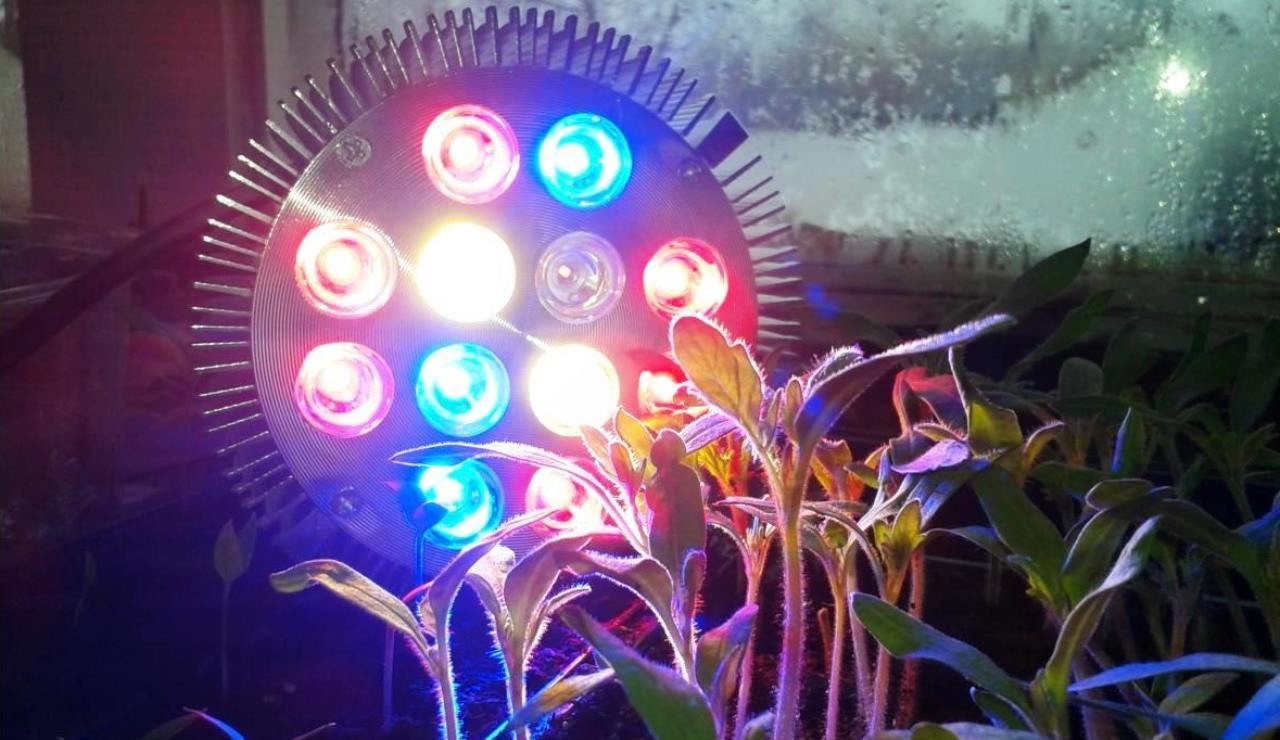 Светодиодные фитолампы для растений, их (ламп) свойства и преимущества - тема нашего материала сегодня