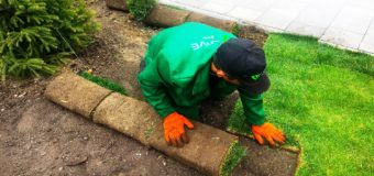 Рулонный газон или посевной: что лучше? Мнение специалиста