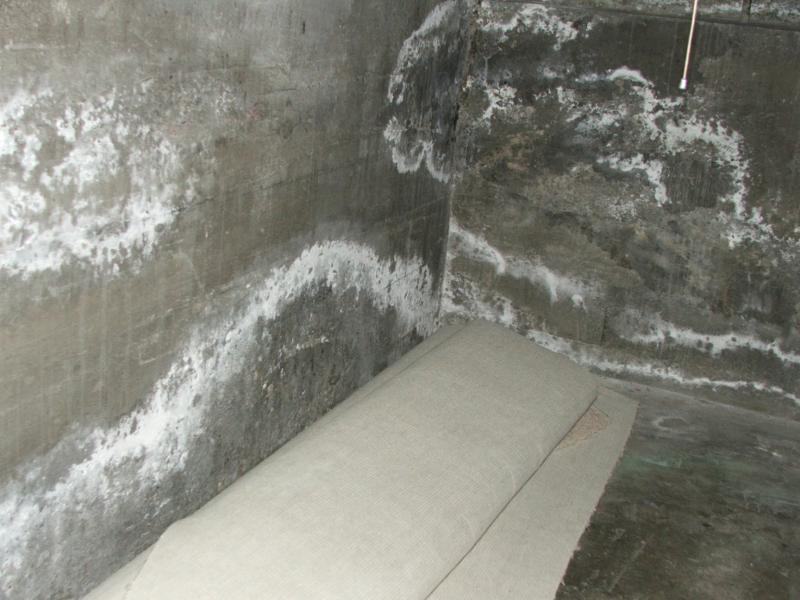 высолы на бетоне