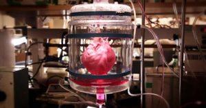 Сердце из пробирки в результате целого цикла научно-исследовательских изысканий и экспериментов получила группа северо-американских ученых