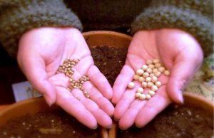 О том, каквыбирать семена различных растений мы поговорим сегодня. Своей компетенцией поделился сотрудник одной из профильных компаний