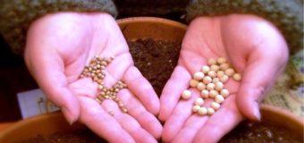 Мнение: по каким признакам нужно выбирать семена?