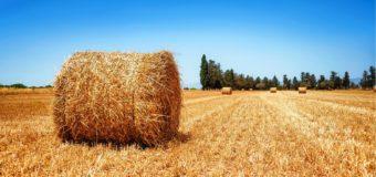 Особенности и преимущества использования шпагата при заготовке сена