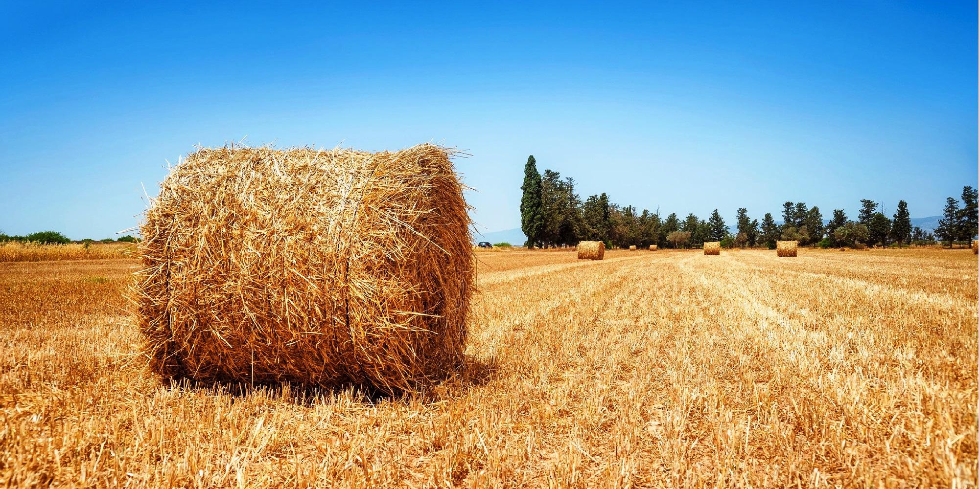 Шпагат при заготовке сена - одно из тех изделий нефтехимической индустрии, что особенно востребованы в сельском хозяйстве, а также во многих других областях