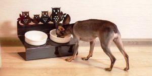 Поговрили с экспертами, продавцами и ветеренарами про такое изделие, как пластиковые двойные тарелки для собак. Вот, что узнали