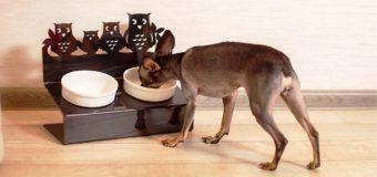 Полимеры в быту: пластиковые двойные тарелки для собак